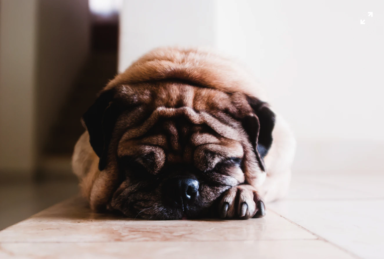 How CBD Can Increases the Appetite of Your Dog and Helps With  Nausea?