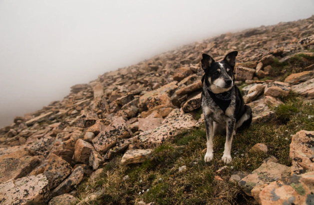 How To Train Your Dog For Hiking