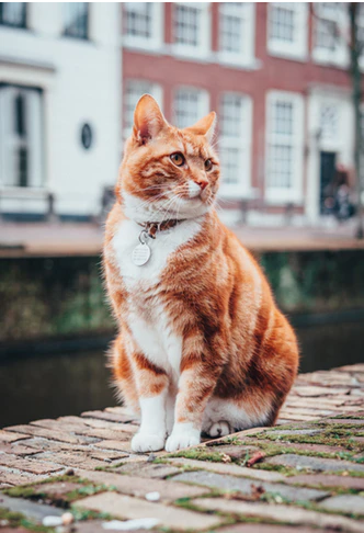 Do Cats Make Good Pets for College Students?
