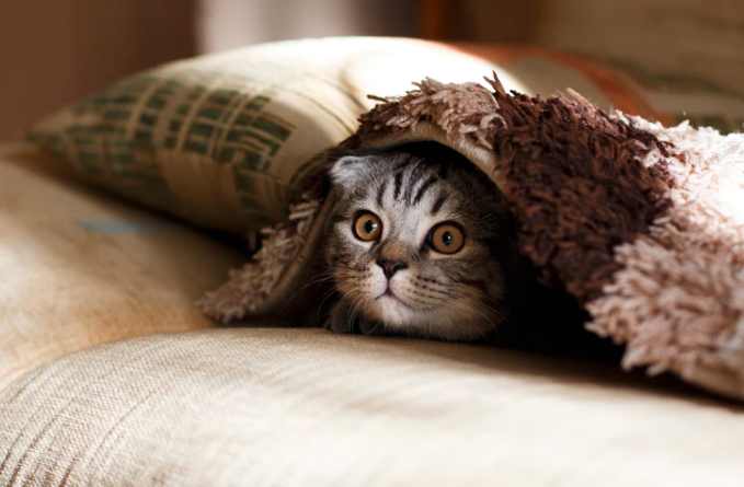 How to Reduce Your Pets Anxiety