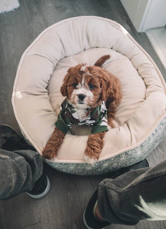 Considered buying a Waterproof Dog Bed but not sure if it's worth it?