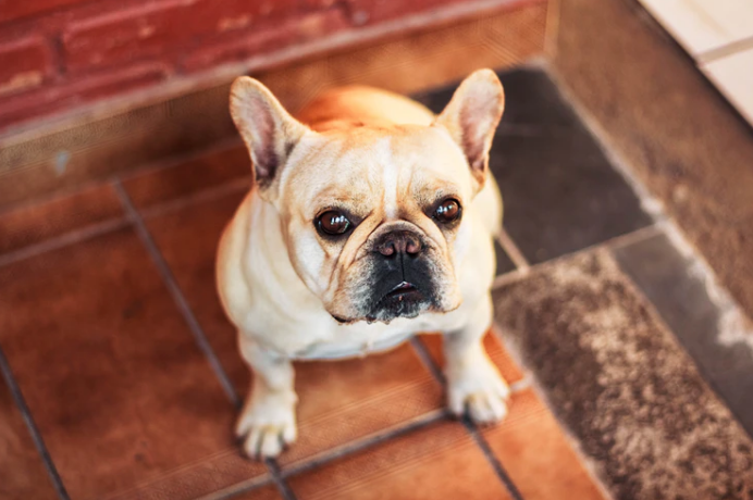 What Do You Need to Do When Your Dog Doesn't Want to Play With You?