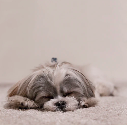 How To Make Sure Your Dog Sleeps Through the Night
