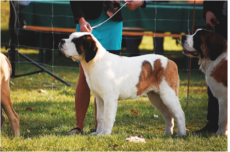 Preparing for the Paws: What to Look for in the National Dog Show
