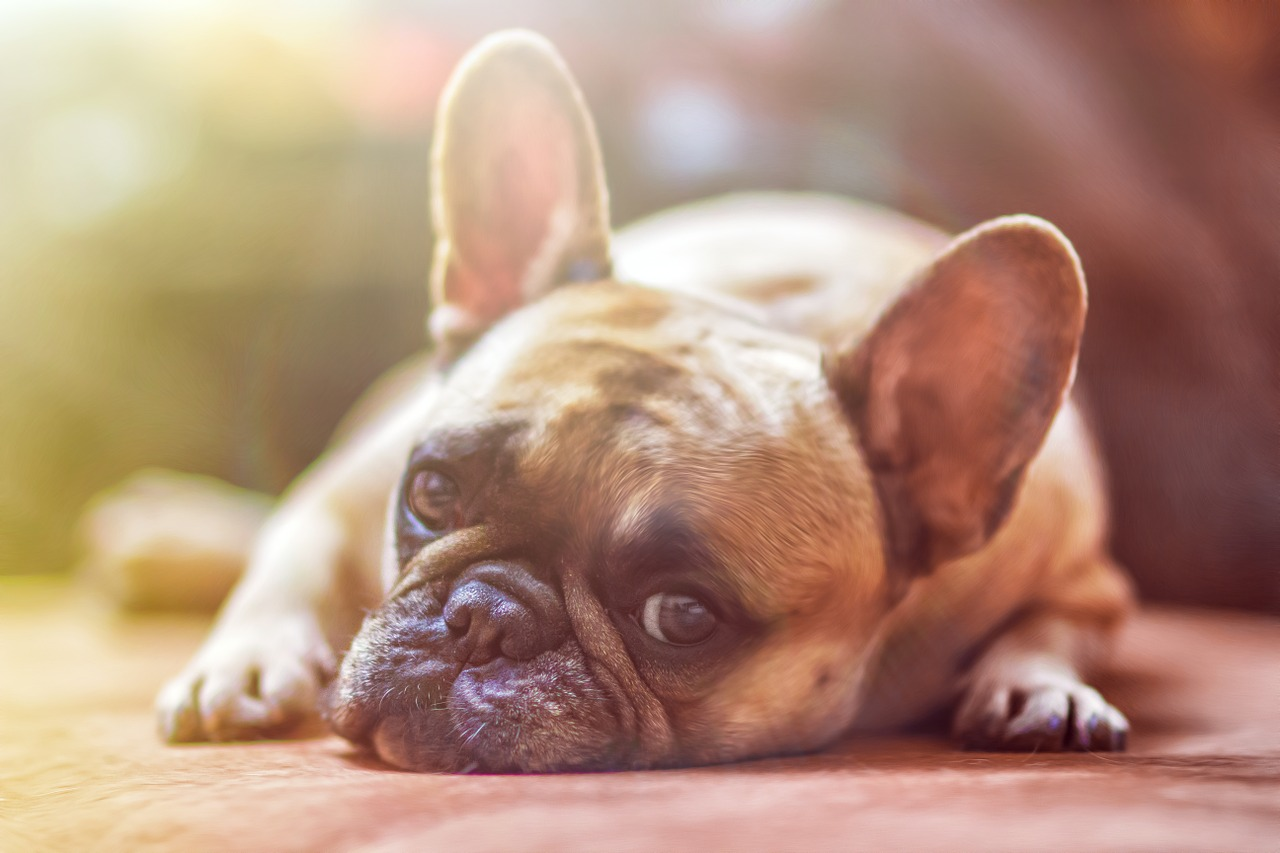 Complete Guide to Leaving a Dog at Home Alone: Be Calm and Save Your House