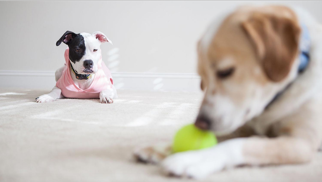 Why Your Pets Don't Like Other Pets in Your Home