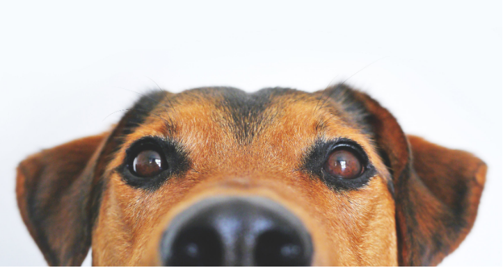How to Choose the Right Dog for Seniors