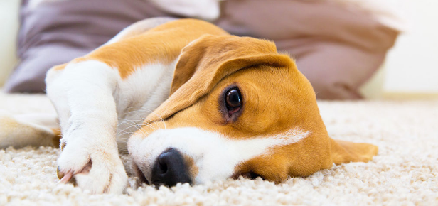 Critical Causes Of Anxiety Symptoms In Your Pets