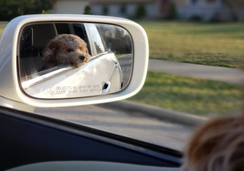 How to Travel Safely with Your Pooch