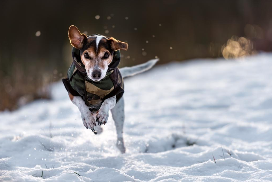 Keeping your dog healthy and happy in winter: Essential tips
