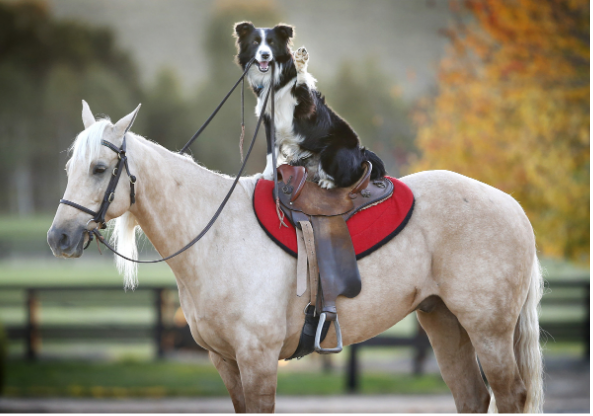 What Is Evolution Animal Care For Horses And Dogs?