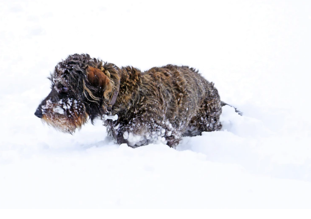 Safety Tips for a Happy NYC Dog Winter