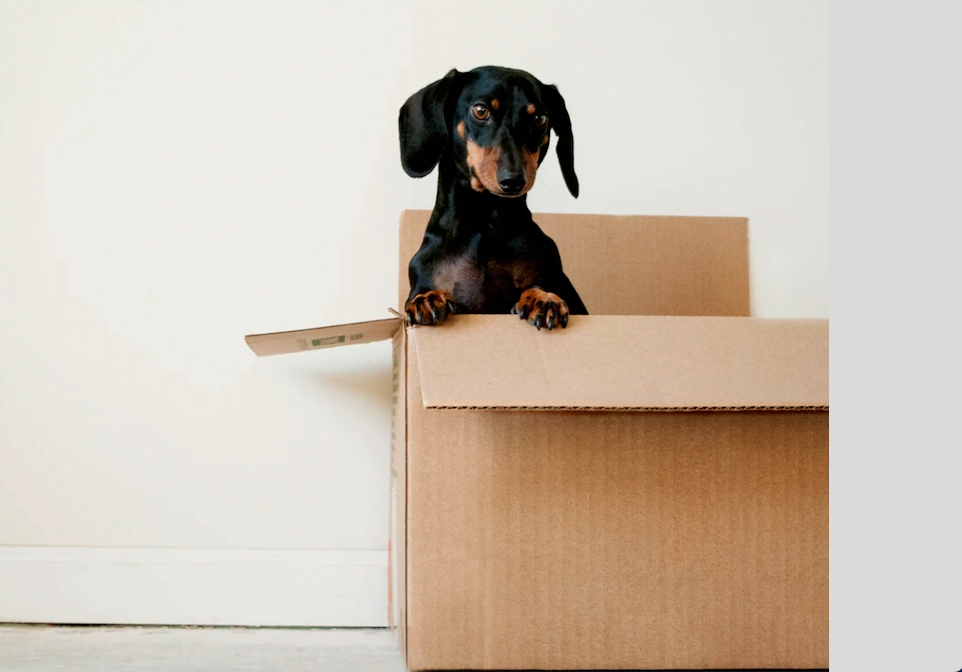 Here Are the Best Tips on How to Move Without Scaring Your Dogs