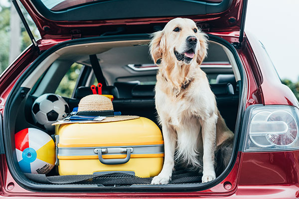 Preparing your Dog for Travel: Required Documents