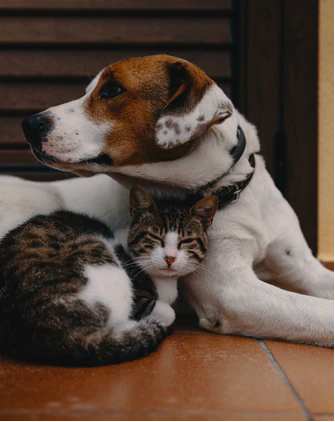 How To Keep Dog From Eating Cat Food