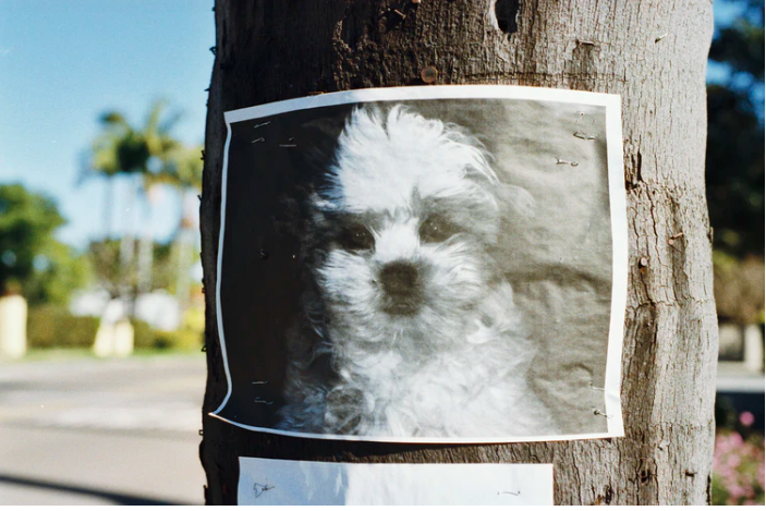 How to Make a Lost Pet Poster