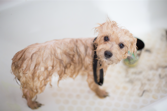 Tips for Cleaning and Grooming Your Dog at Home