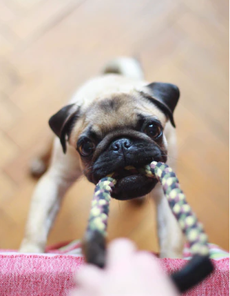 7 Easy Ways on How to Make Your Pet a Part of Your Fitness Routine
