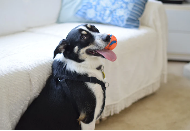 Top Dog Toys for Maximum Fun and Stimulation