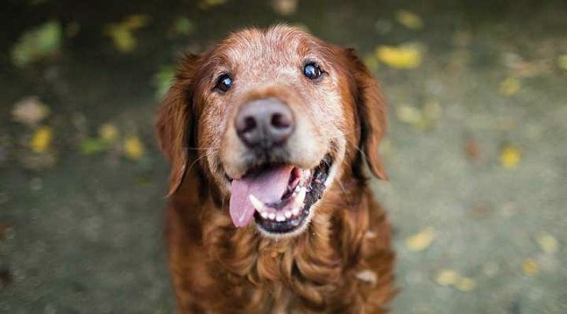 5 Ways to Enhance an Aging Dog's Quality of Life