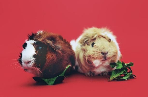 Benefits of Organic Raw Pet Food