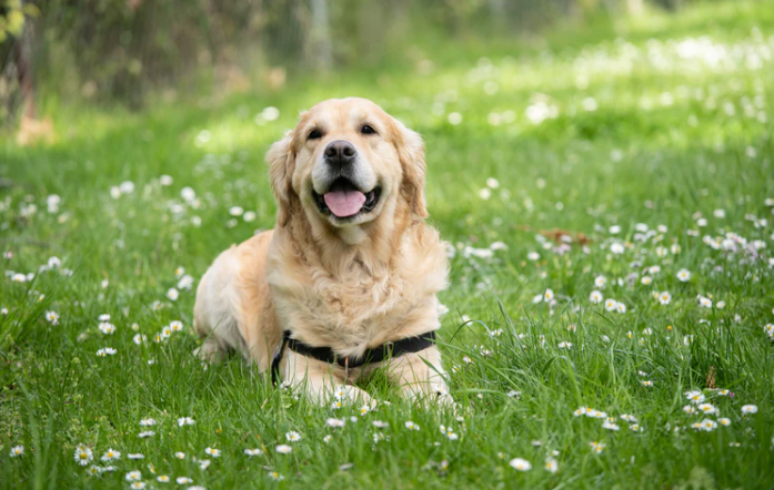 Pet Insurance: Top 3 Things Every Dog Owner Should Know