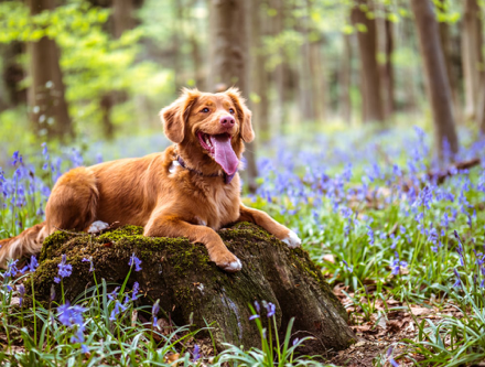 What Do You Need to Know Before Getting Your Dog Cannabis?