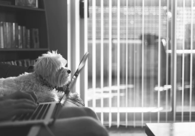Find Your Dog's Breed and Other Fun Facts with A Reverse Search Image Tool!