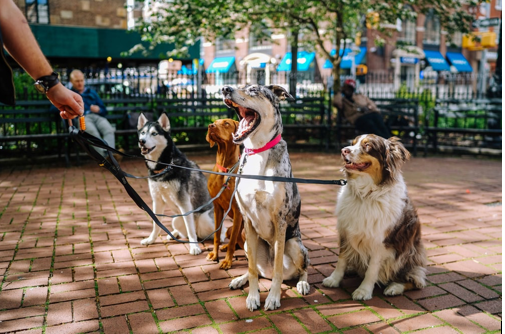 March 2020 Calendar of Dog Friendly Events In NYC