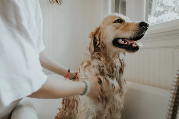Dog-Hair Removal Hacks That Will Change Your Life