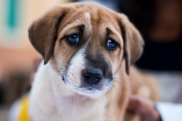 6 Signs that Your Pup Is Sick