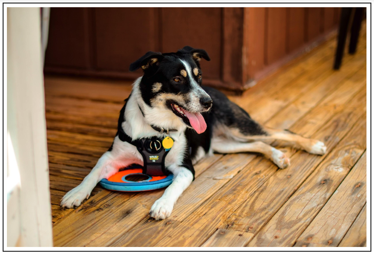 How and Why You Might Certify Your Dog as an ESA