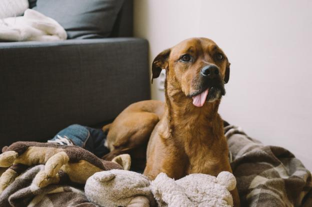 8 Mixed Dog Pups That'll Melt Your Heart!