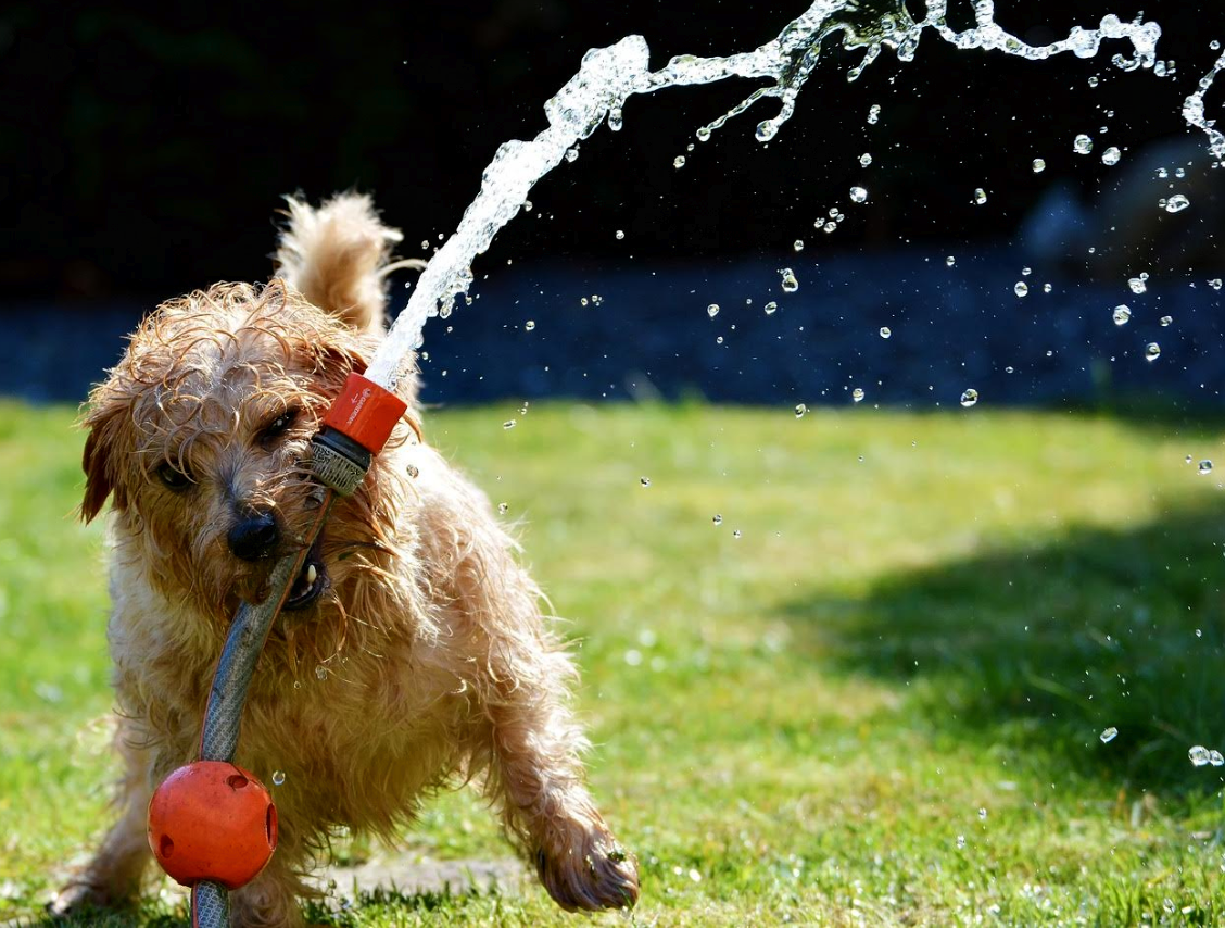 4 Effective Ways to Dog-Proof Your Backyard