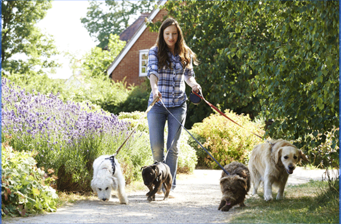 10 Tools & Accessories That Every Dog Walker Should Have on Hand