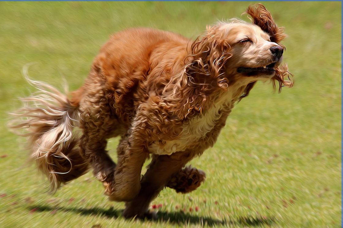 How to Find the Right Mix of Dog Activities to Suit Both You and Your Pup