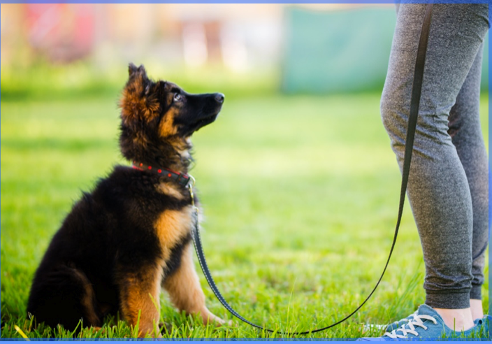 Your first puppy – tips to help you get it right