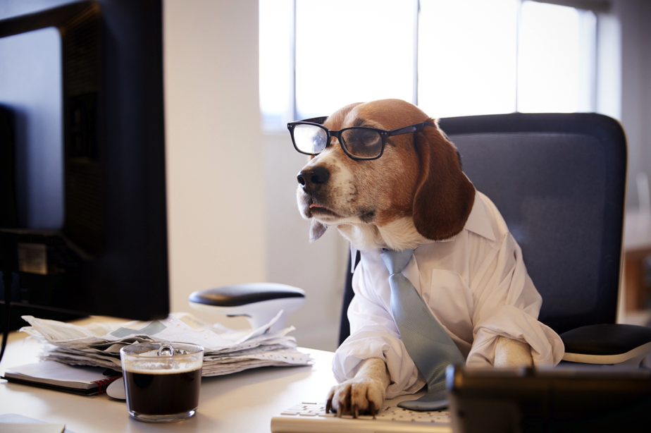The Best Pet Business Ideas and Marketing Tips to Know