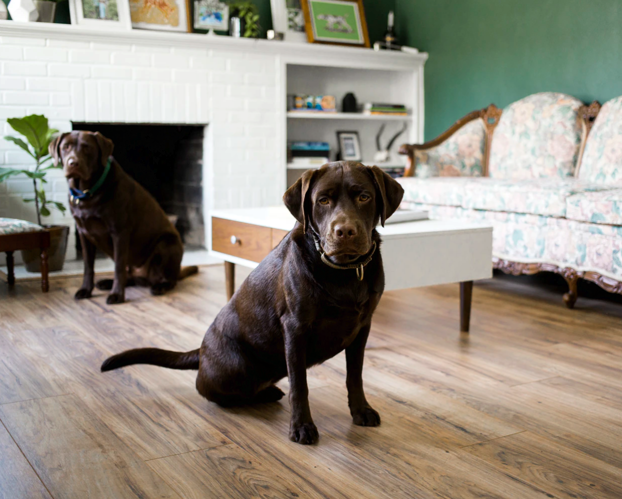 Looking After Labradors With Different Personalities