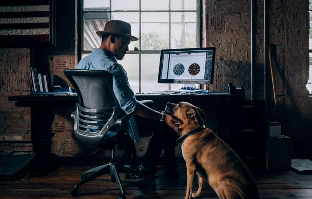 Working from Home with Your Pet? Here's How to Calm Them Down