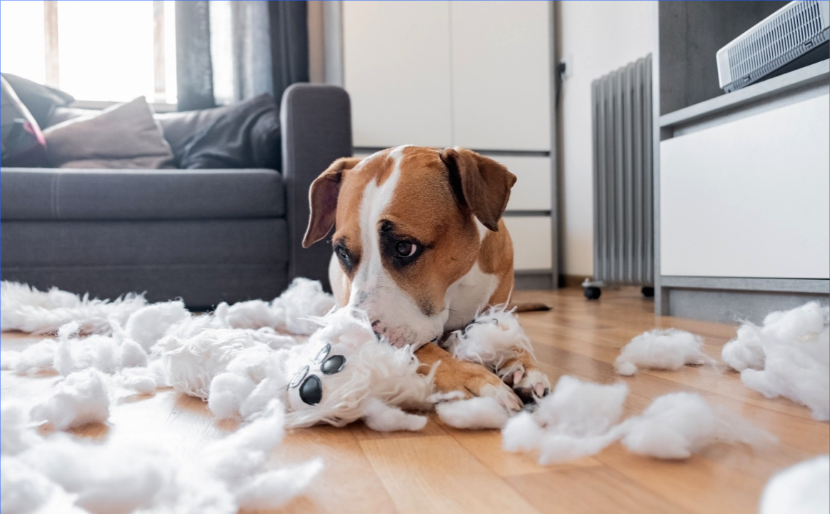 Whether to punish your animal for bad behavior?