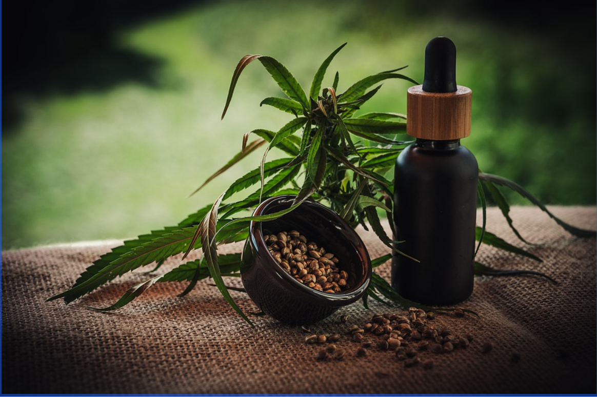 CBD Oil for Dogs With Cancer – Can This Help?
