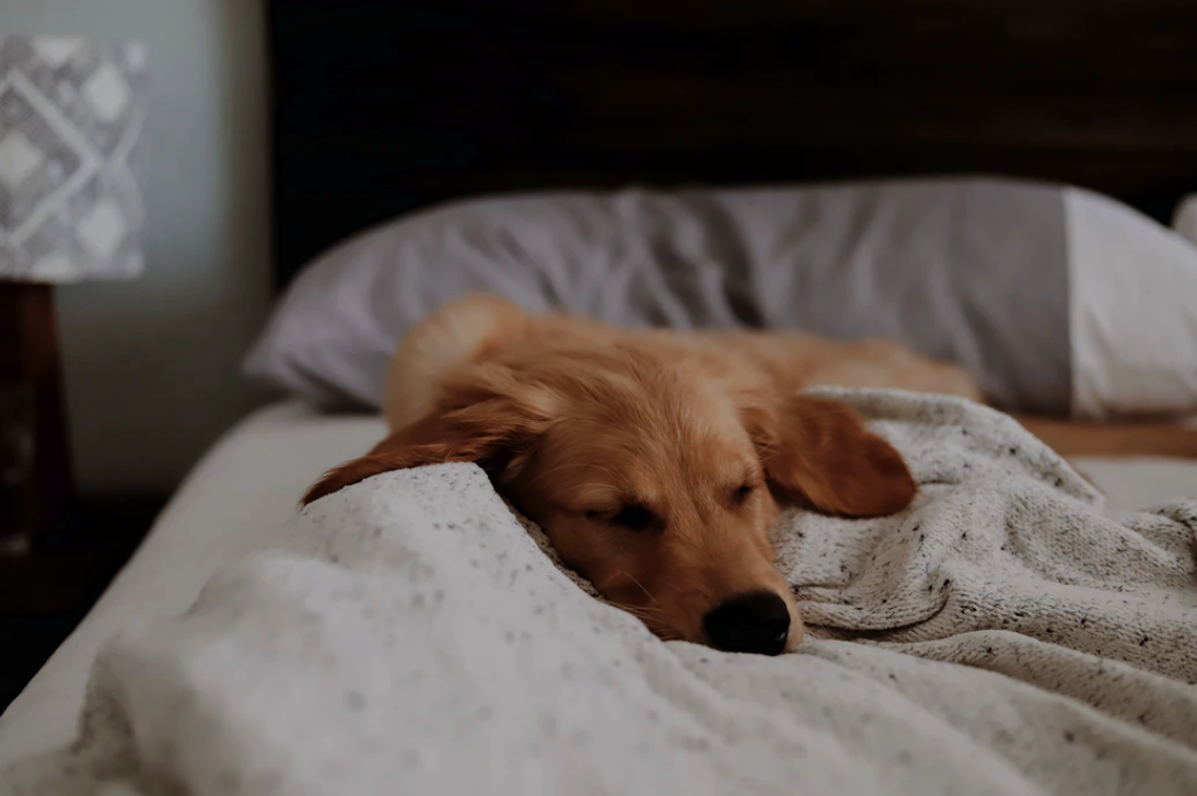 Hotel Travel Tips: Creating A Safe Environment For The Jet-Setting Dog