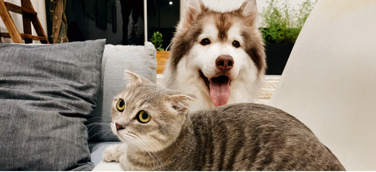 7 Mistakes That Shorten Your Pets Life