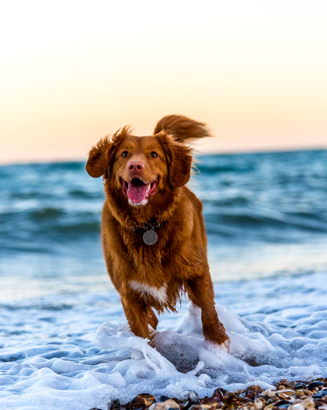 Keeping Your Dog Safe When Exploring Bodies Of Water