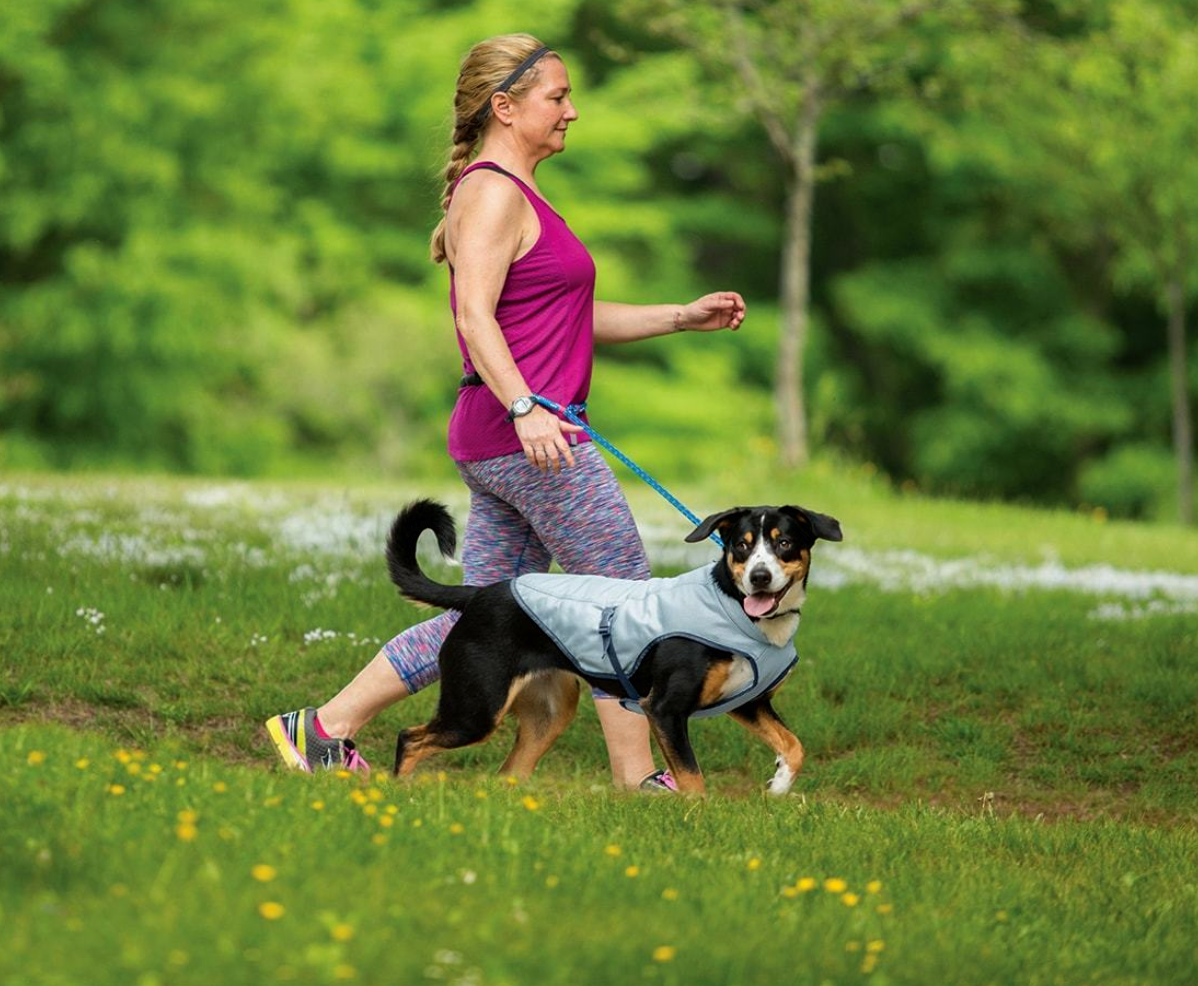 Cooling Vests For Dogs – How to Choose the Best One?