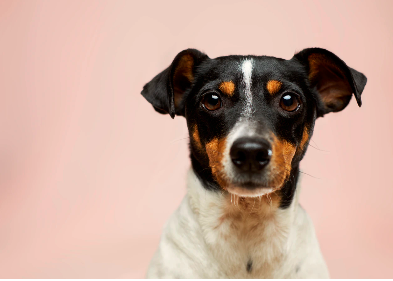 How Bad Is Your Dog's Breath?