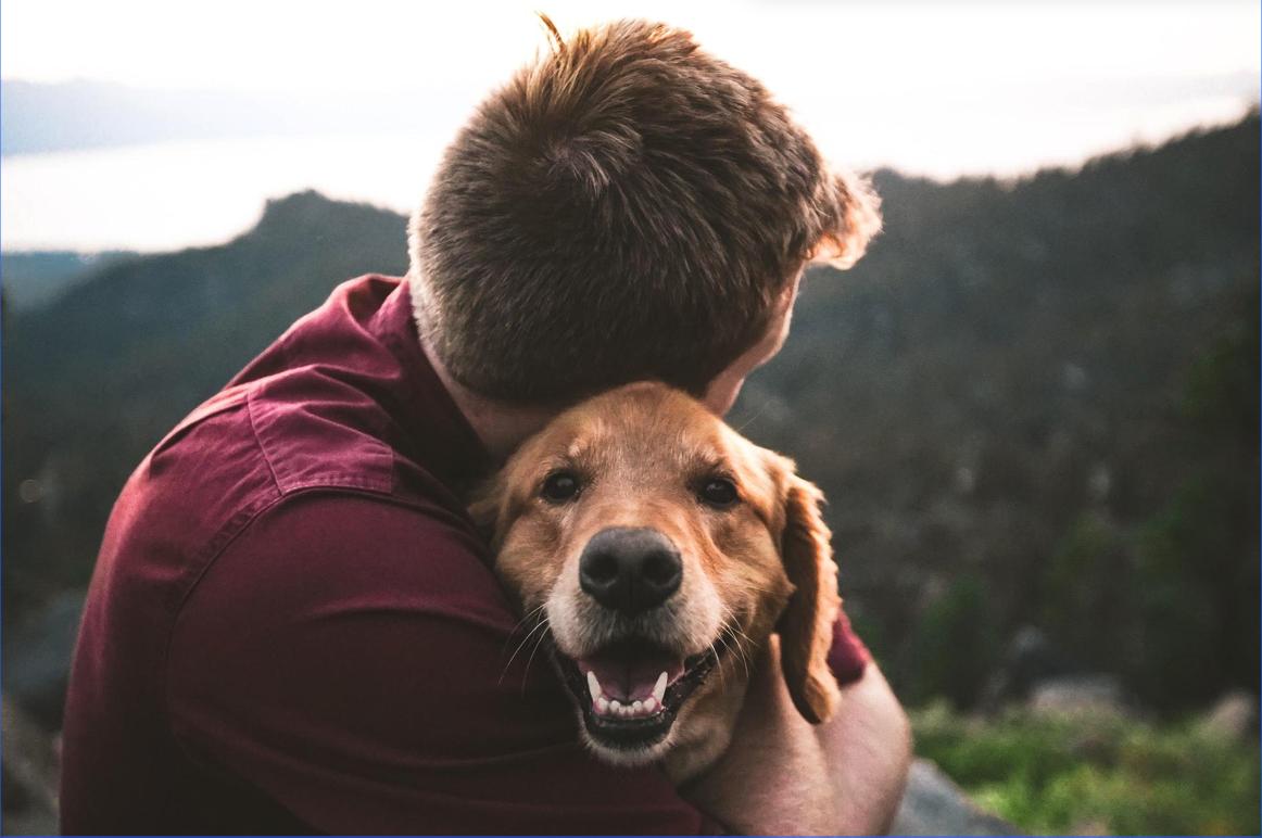 5 Great Benefits of CBD Treats for Pets