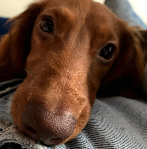 Tips for Keeping Your Dog Happy When They are Home Alone