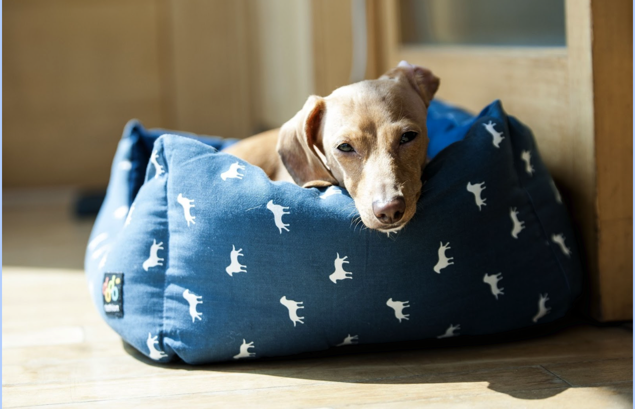 Dog Essentials: The Top Items Every Dog Parent Should Own